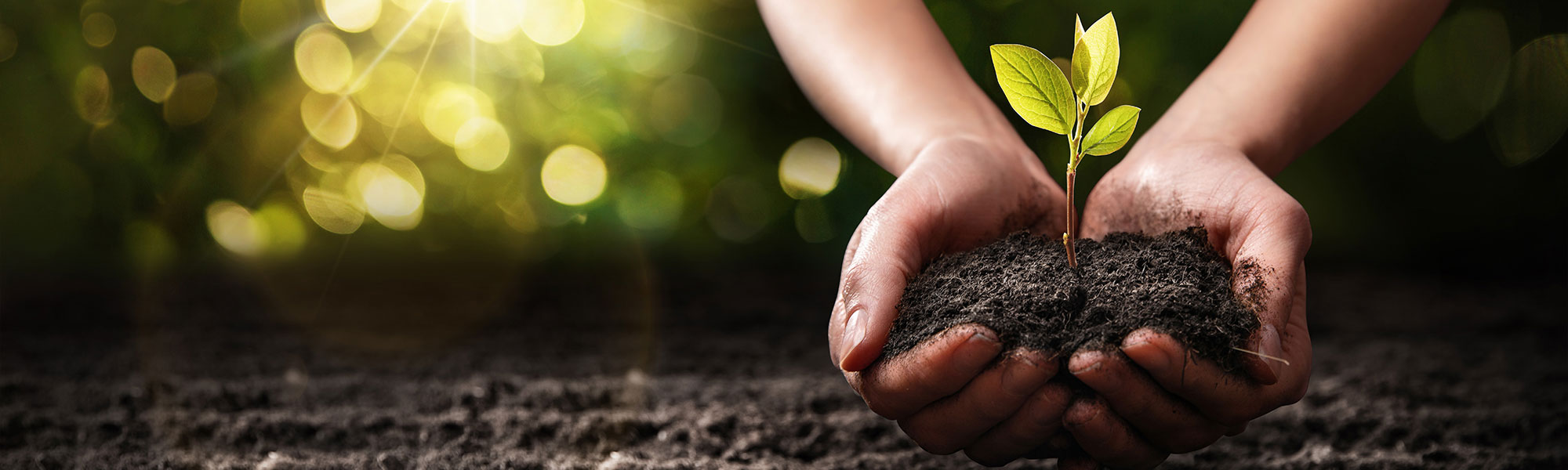 Soil, and plant in palm's hand